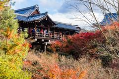 東福寺 (~neko x~) Tags: 東福寺 kyoto 京都 japan 日本 trip travel sony a72 ilcea7m2 2470 gm g 旅行 旅遊 taiwanese 楓葉 maple