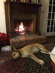 Happy at Home (ABMoss) Tags: dog happy laying down winter fireplace christmas holidays hearth mantle