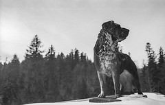 Stone dog (Firescu.C) Tags: adoxsilvermax analog nikonfm film 135 romania epsonv600 filmscan monochrome bw nikkor28mmf2ai pelescastle sinaia prahova dog statue bokeh