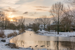 Beukenpark-40-1 (stevefge) Tags: beukenpark beuningen landscape snow winter gelderland glow sky yellow trees water ice reflectyourworld reflections birds nederland netherlands nature nl natuur sneeuw