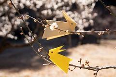 Rabbit and Plum (Ichigo Miyama) Tags: うさぎとウメの花 ウメ 梅 plum rabbit origami prunusmume バラ科 rosaceae 春 spring flower plant うさぎ 折り紙 おりがみ paper