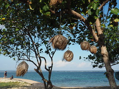 Bali Sanur (hooge69) Tags: dream holliday bali sanur beach coconuthead sun living strand urlaub kokosnuss seaview paradise