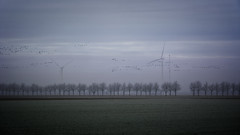 Where All The Birds Go (Alfred Grupstra) Tags: birds frost mist trees windmills wieringerwerf noordholland nederland nl