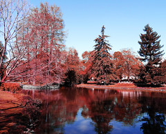 Hiver au parc (François Tomasi) Tags: nature reflection eau water plandeau parc jardin garden trees tree arbres arbre tours villedetours pointdevue pointofview pov touraine indreetloire france europe couleurs couleur colors color tomasi françois françoistomasi yahoo google flickr reflex nikon photo photography photographie photoshop lumières lumière lights light rouge red février hiver winter 2017
