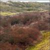 RED VALLEY (ESOX LUCIUS) Tags: me landscape ilovenature taco naturereservedekwadehoek saltlickr duinengoereeenkwadehoek