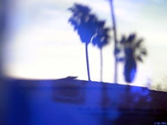 Thru' Blue (Ale*) Tags: california blue glass azul tag3 taggedout palms tag2 tag1 blu ale bleu transparency blau ventura