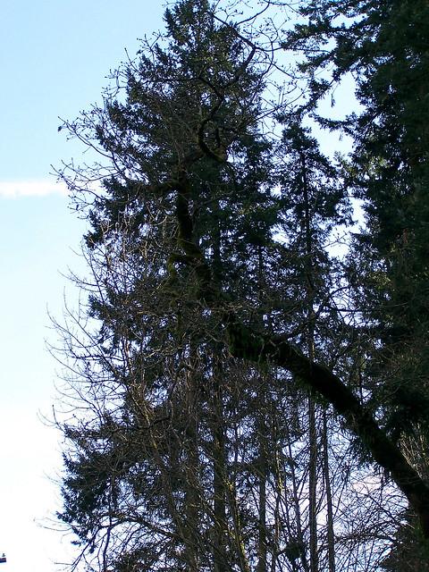 Moss hung arbor