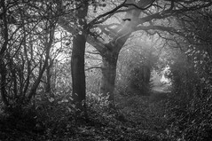 Red Lane 3 (Alan E Taylor) Tags: atmospheric autumn bw blackwhite blackandwhite dramatic england europe fall fineart landscape lane mono monochrome moody nikcolorefexpro noiretblanc path redlane season staffordshire track trail tree unitedkingdom madeley gb