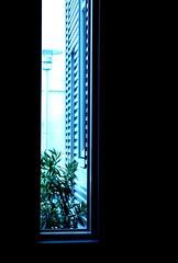 Bush and Lamp, 2005 (Thomas Hawk) Tags: california city blue light plants usa window lamp vertical america dark oakland long unitedstates room unitedstatesofamerica front tall eastbay chabot chabotspaceandsciencecenter