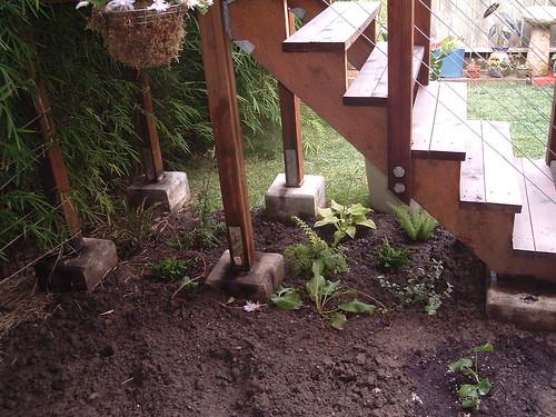 shade garden aug 18 2005