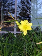 IMG_2426 (colin j.) Tags: flowers flower detail macro green yellow closeup genitalia