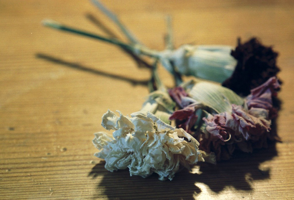 carnations drying out as Finals fade from memory