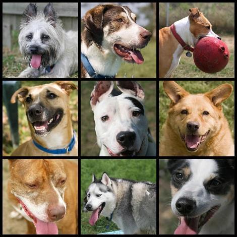 اجمل الكلاب من حول العالم - كلاب جميلة - كلاب حلوة