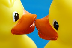 Duck to Duck (frielp) Tags: plastic bath duck yellow blue toy water kiss love lips