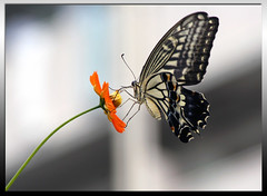 Butterfly (DigiPub) Tags: butterfly insect ilovenature explore