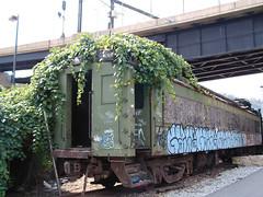 ivy car - by saeru
