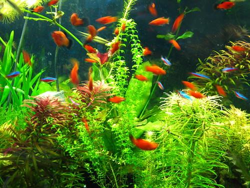 Mumsie's Fish Tank