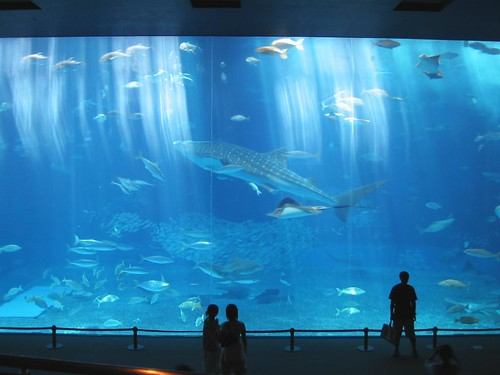 Beauty and others sea aquarium/Okinawa Churaumi Aquarium