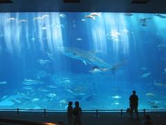 美ら海水族館に行くの画像4
