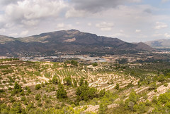 Alcoy (Not forgotten) Tags: alcoy spain olives agriculture comunitatvalencia
