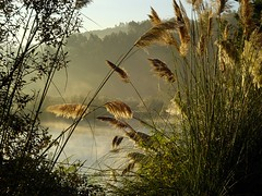 Ribera de la Ra de Plentzia (Tenebris) Tags: tenebris 2005 amanecer niebla lambroa plumeros ra plentzia bizkaia basque spain eh