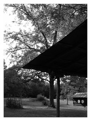 Back Yard and Porch Roof of Mr. Weaver's Log House (Old Shoe Woman) Tags: usa georgia southgeorgia dilosep05 tree loghouse tinroof backporch mrweaver dilosept05bw dilosept05