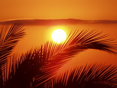 Sunset (Iveta) Tags: sunset orange sun beautiful wow evening interestingness sonnenuntergang explore ibiza palmtree romantic eivissa sonne iveta palmen naturesfinest wowiekazowie byiveta friendlychallenges