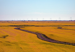 Field of Gold and Purple (jaxxon) Tags: nature canon misc g6 miscellaneous powershotg6 canonpowershotg6 broll jaxxon jackcarson jacksoncarson jacksondcarson