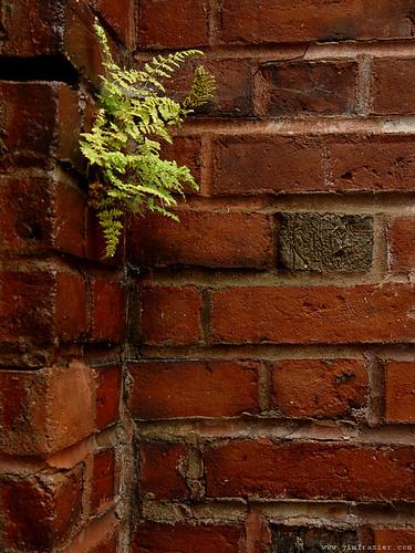 Fern and Brick