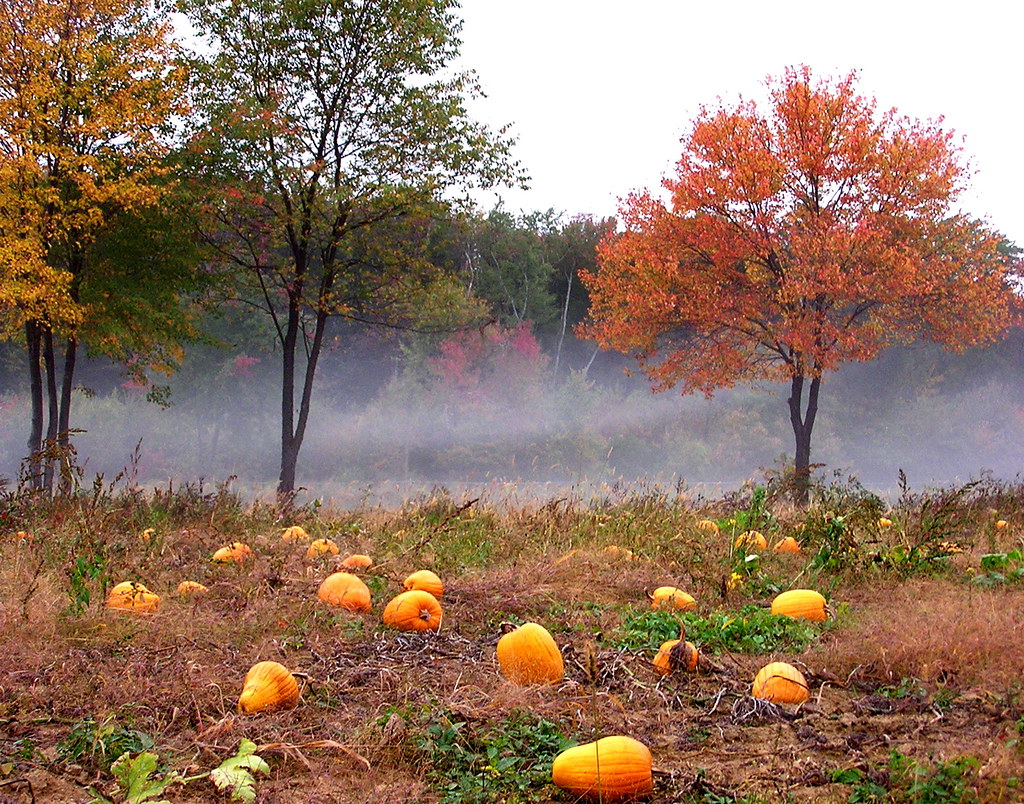 50195772 63084c6bf2 b Photo Essay: Incredible Pictures of Pumpkin Patches