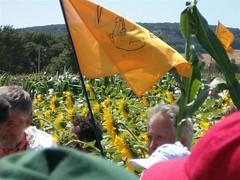 ogm-07 (desfilhesjm) Tags: corn gmo maize dufour ogm transgenic mas transgenique faucheursvolontaires