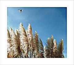 Wind (capitan-patata) Tags: blue sky sun sol 1025fav 100v lafotodelasemana fly wind viento 100v10f 10f blow lfstecnica josemanuelholguin lfsaves topphotoblog