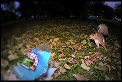 Gotcha (candersonclick) Tags: squirrel nut peanuts funny nature fisheye humor fallcolors bushytailed crafty