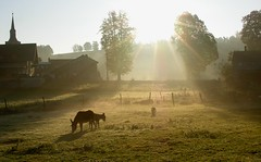 Pastoral scene (:Linda: (till the end of the year OFF)) Tags: morning sun house tree church animal fence germany dawn ray village hill mother meadow donkey kirche son thuringia explore woodenfence esel explored brden holzzaun