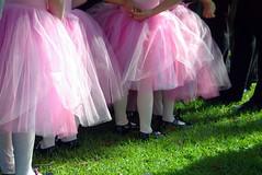 Pink Tutus (rustman) Tags: pink girls light ballet dance dress galleria tutu sheer sbp2005