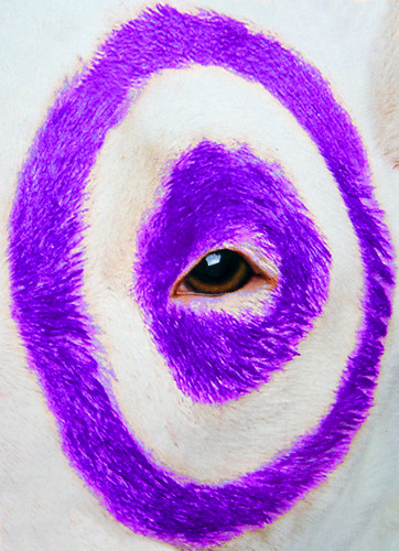 target dog bullseye. poster of the Target Dog