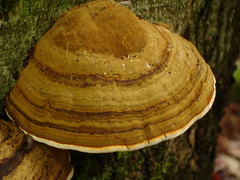 DSC01143 (mikefurgang) Tags: hardrain tabortonroad river forest 214 backyard
