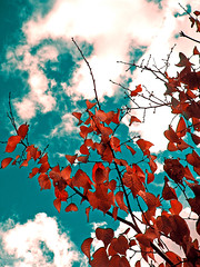 (ives*) Tags: sky leaf red contrast autumn 4autumn almost1 great great2 almost2 almost3 great3 great4 great5 almost4 great6 great7