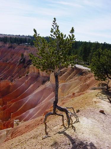 Bryce Canyon Nat'l Park