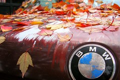 beemer (Ben McLeod) Tags: flickrimportr car bmw leaves foliage decay fall autumn peeling