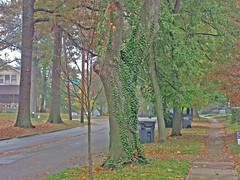 Fall Colours On Fontaine X (mightyquinninwky) Tags: lexingtonky fayettecountyky fontaineroad chimes clouds trees