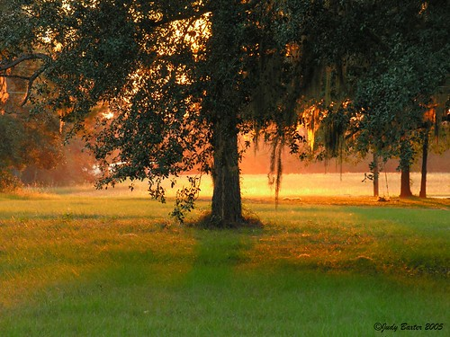 Sunlight Under a Live Oak Tree