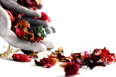 LeTTing gO (:R.e.a.s.o.n:) Tags: reason flowers potpourri colourful colours colors white bright whiteground lettinggo idlehands driedflowers hands birdpoem wonderful ohthanksd flickrsoupforthesoul fsftsblog d70 topmc05 mc05negativespace