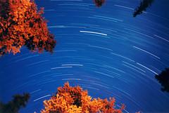 Fire Lit Tree Top (Bhlubarber) Tags: longexposure sky blur tree night forest stars fire bestviewedlarge 123 treetops campfire 200views 510favs v400 startrails davidniddrie lptime