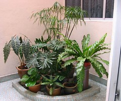 Greens at our courtyard in September 2004