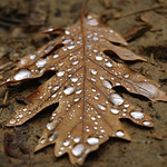 diamonds on a christmas tree :)