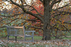 Waiting for the Last Leaf to Fall (code poet) Tags: autumn tree fall leaves bench lexington kentucky arboretum 100mm