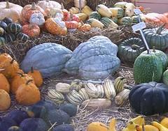 Krbisausstellung im Gartenhaus (happycat) Tags: fruit germany pumpkin weimar thringen vegetable we belvedere frucht gemse krbis belvedereinweimar