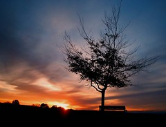 An Astonished Tree (Trapac) Tags: blue autumn light red england sky orange tree silhouette yellow clouds bench downs bristol geotagged gold thedowns durdhamdown bristoldowns geo:lat=51471146 geo:lon=2625808 gtap310110