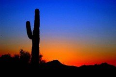 Saguaro in sihlouette (gwilmore) Tags: sunset arizona backlight wow d50 contraluz bravo 500v20f searchthebest albaluminis sihlouette saguarocactus interestingness25 explore25nov05 i500 nikonstunninggallery fcsetsrises azwsunset